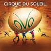 Bild Cirque du Soleil: OVO- Zusatzshow