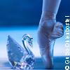 Schwanensee mit 48 Schw�nen - St. Petersburg Festival Ballett