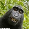 Bild Terrorgruppe - Tiergarten Abschluss-Show + Support