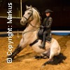 Christmas on Horse: Nördlinger Weihnachts-Pferde-Circus