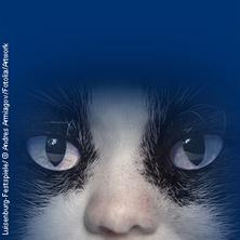CATS : Luisenburg-Festspiele - Tickets