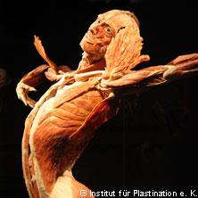 Körperwelten: Eine HERZenssache